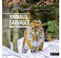 Calendrier annuel 2021 - BOUCHUT -  30 x 30 - Animaux sauvages