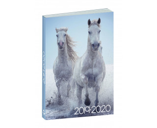 Agenda scolaire journalier 2019/2020 - TOP OFFICE - 12 x 17 - Animaux Chevaux