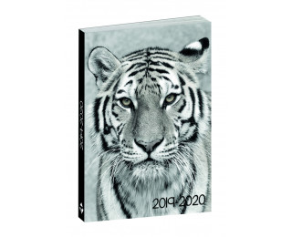 Agenda scolaire journalier 2020/2021 - TOP OFFICE - 12 x 17 - Animaux Tigre