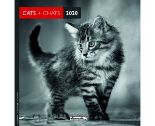 Calendrier Chat 2020.Calendrier Annuel 2020 Pictura 16 X 16 Chats