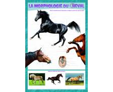 Poster éducatif recto verso Cheval mon Ami - PICCOLIA